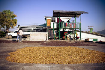 pulped natural process in san vicente